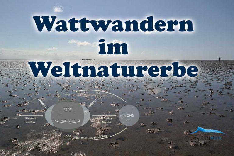 Mare Apartments Wattwandern
